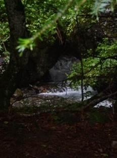 Arboretum de Joueou