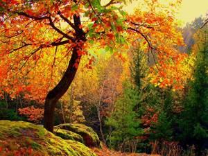 Quand la forêt révèle ses couleurs