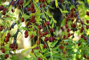 Secret de plantes en couleurs