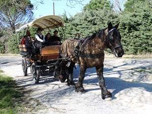 En diligence sur les chemins du Pont du Gard