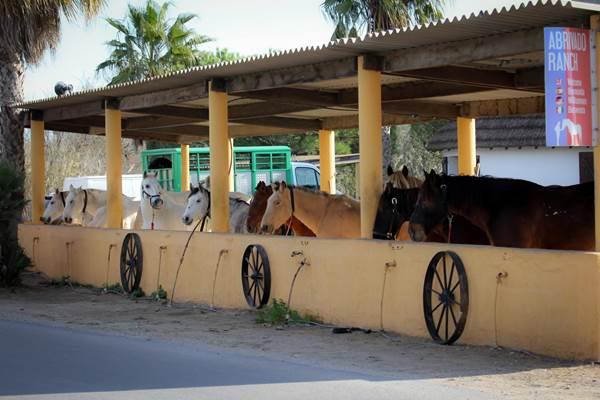 Centre equestre Abrivado Ranch
