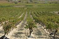 Cave des vignerons d'Estezargues