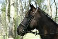 Gard'n Horse