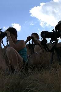 Ouvrez l'oeil ! Cherchez le mouflon sur le massif de l'Aigoual !