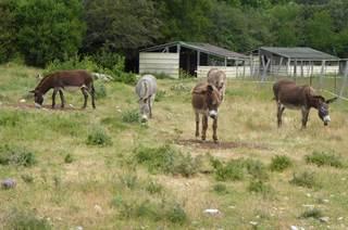 Causse et Lamas - rando ânes