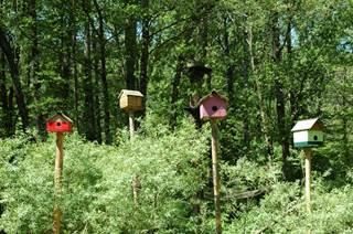 Le bois des plumes