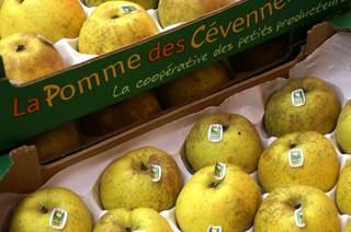 La Pomme Reinette