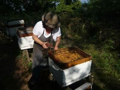 Ruches et apiculture en Pays Basque