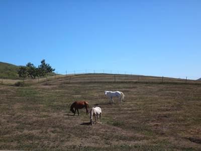 Lasbleiz Western Training, Equitation (cours et balades)