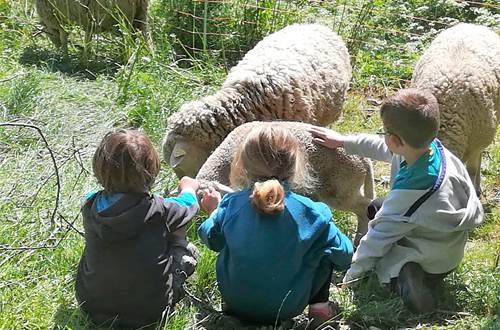 asinerie-badjane-rencontre-avec-les-agneaux ©