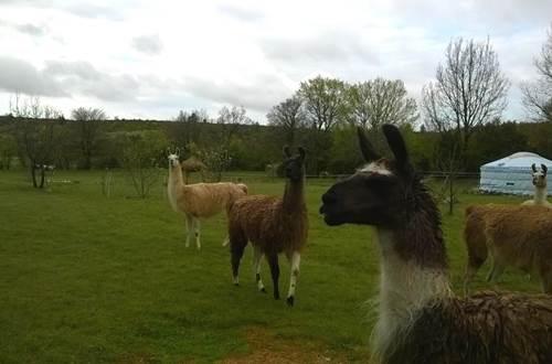 Causse et Lamas 18 ©