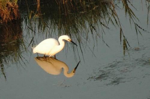 Oiseau - Camargue Aventure ©