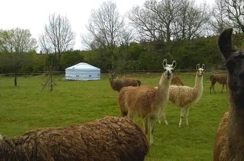 Causses et Lamas 8 ©