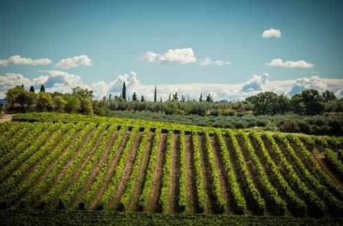 Paysage méditerranéen dans le vignoble de la cave des Collines du Bourdic © 2017-Hervé Leclair Asphéries-Sud de France Développement
