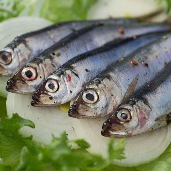Fête de l'anchois